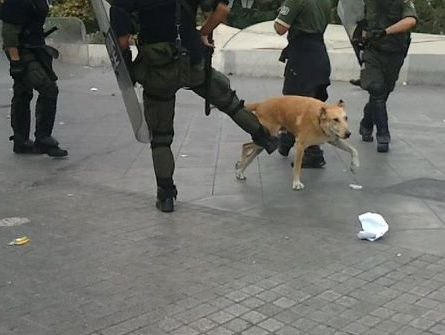 Loukanikos with Police.jpg