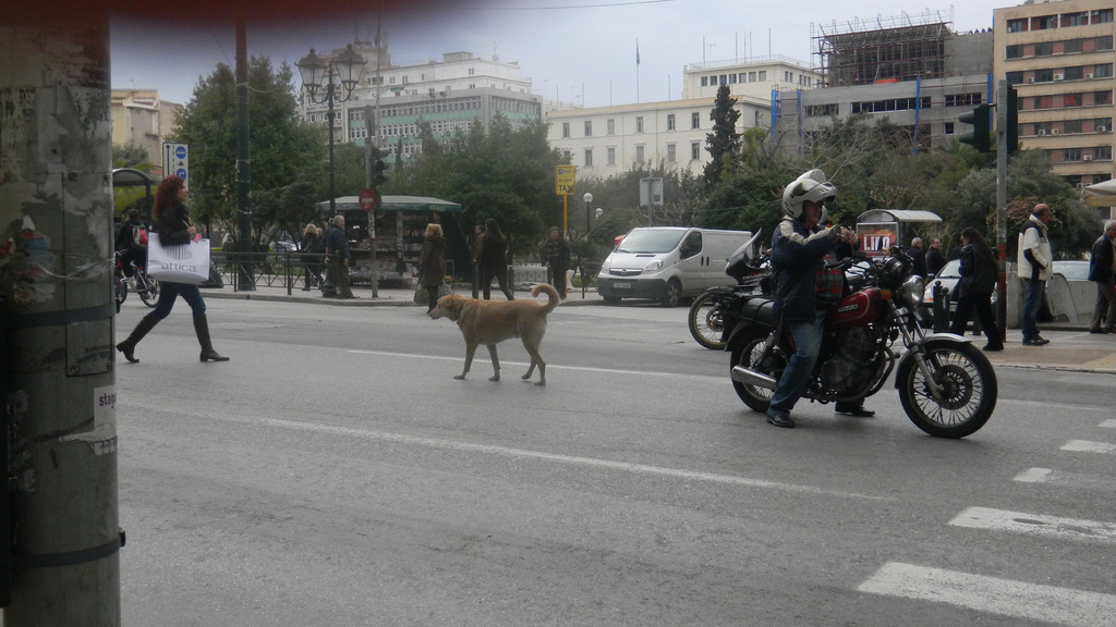 Greek protester dog.jpg